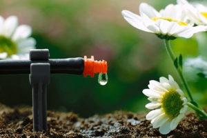 Tưới nhỏ giọt – Bước tiến mới cho nền nông nghiệp công nghệ cao