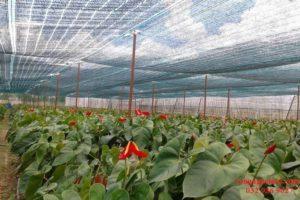 Tầm quan trọng của lưới che nắng trong sản xuất nông nghiệp